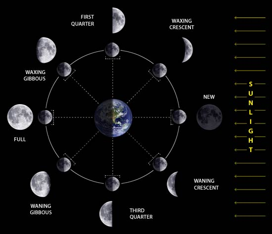 http://www.astronomycast.com/wp-content/uploads/2008/11/moon_phases_diagram.jpg